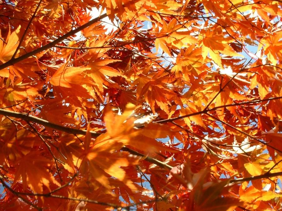 5 signs autumn has arrived