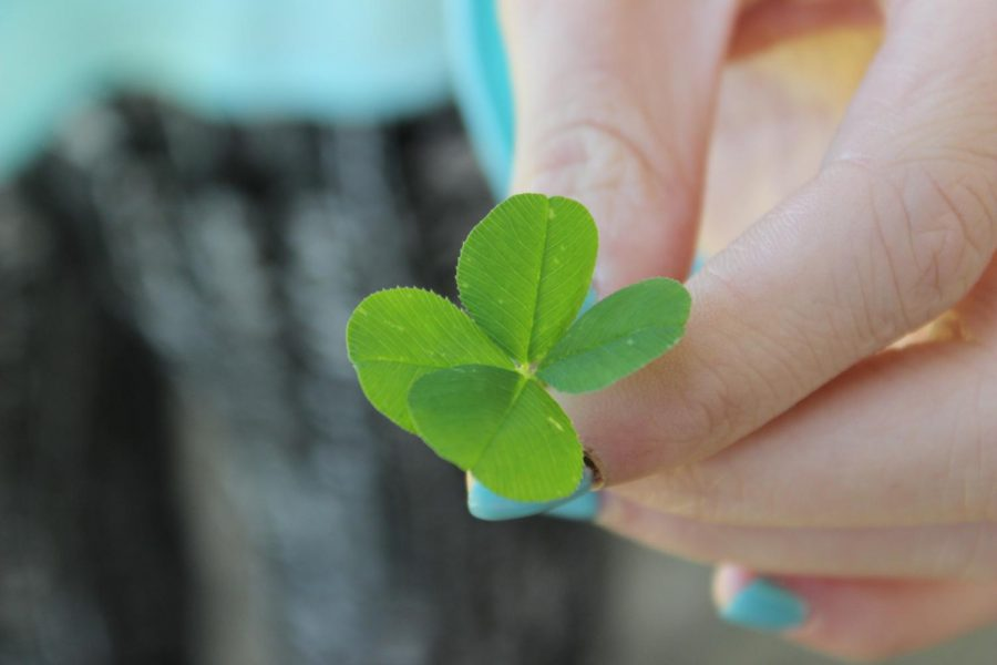 A+four-leaf+clover+is+one+of+the+most+famous+symbols+of+luck+associated+with+St.+Patrick%27s+Day.