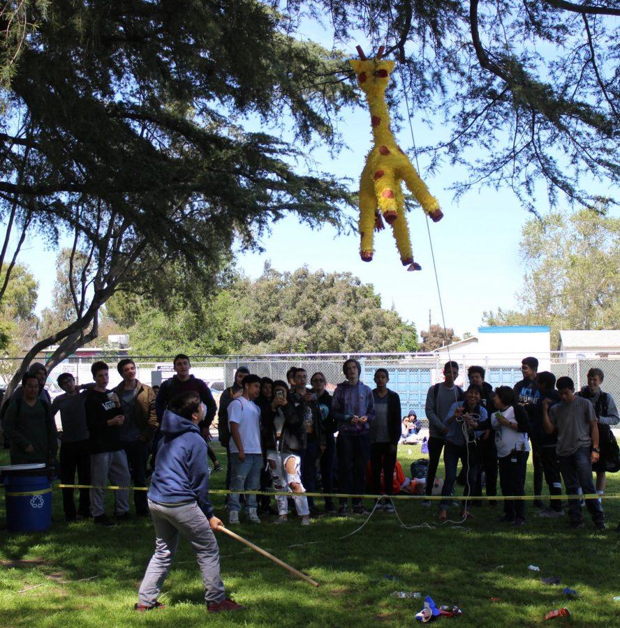 Freshman Justin Pernillo hits a giraffe pinata during Fiesta Friday on March 29.