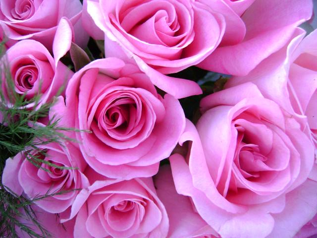 Gifting pink roses to someone can convey their perfection, elegance or sweetness. Additionally, pink roses can serve as a thank you or recognition from giver to the recipient.