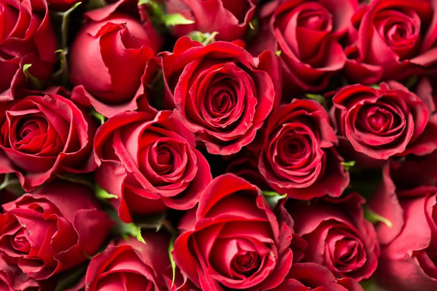 Red roses, perhaps the most popularly gifted flowers on this holiday and flower sales in general, symbolize love and romance. They serve as a way to reflect the beauty of the receiver.